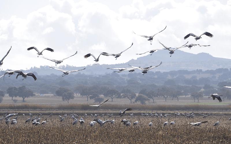 Balhondo Ruta ornitologica